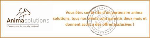 Anima Solutions