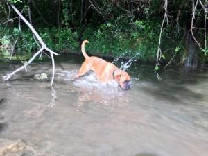 Loula baignade