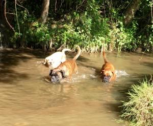 baignade de Gaïa et Loula